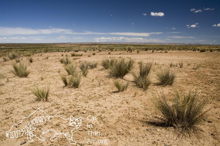 Altiplano, western Bolivia