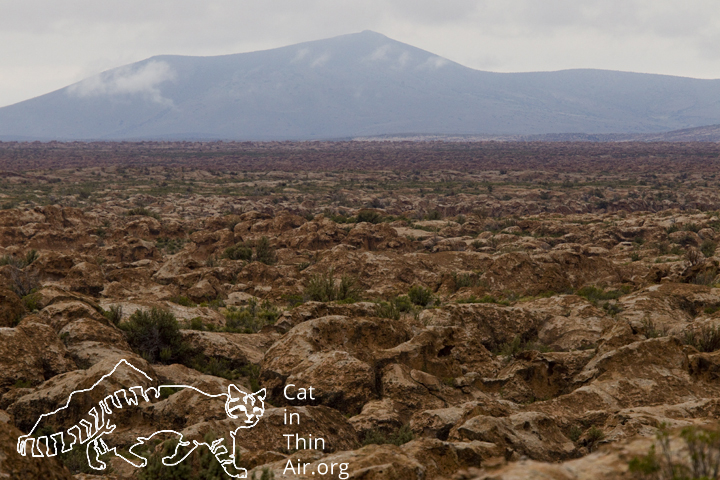 Altiplano, Ciudad de Piedra, western Bolivia