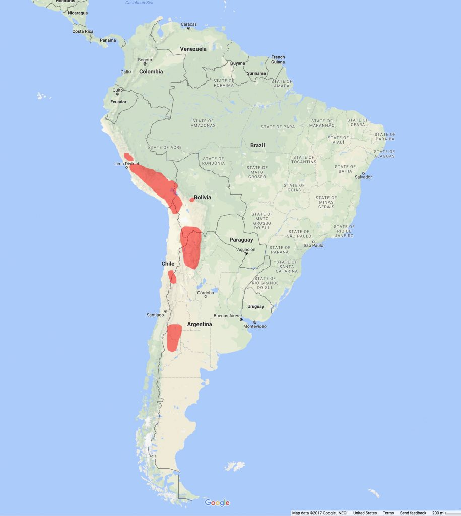 Andean Cat Distribution Range Map